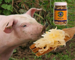 Beat Swine Flu by eating organic sauerkraut